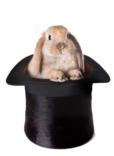 rabbitinhat